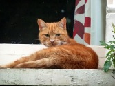 Cat in the Village