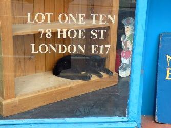 Cat in Hoe Street shop window