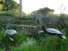 19 Turtles Swimming Through Kelp by Piers Mason