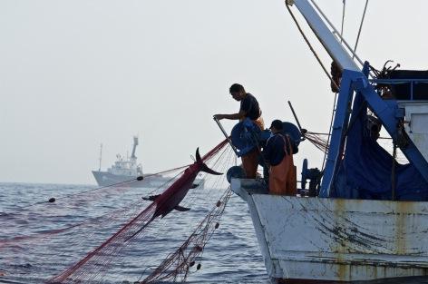 Illegal drift net fishing by Italian vessl in the Mediterranean Sea.